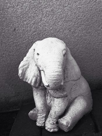 No People Elephant Indoors  Close-up Day Animal Themes Statue Blackandwhite White Elephant