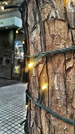 No People EyeEm Best Shots Streetphotography Happy Christmas Christmas Decorations Christmas Lights Christmas Tree Christmastime Argentina Photography Merry Christmas Navidad 2015 Street Photography Streetphoto_color Wood Arbol De Navidad