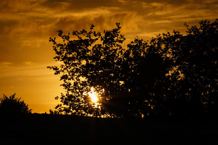 Sky Sunset Silhouette Plant Tree Orange Color Beauty In Nature Tranquility Scenics - Nature Tranquil Scene Cloud - Sky Nature Growth No People Sun Idyllic Low Angle View Land Outdoors Non-urban Scene EyeEm Best Shots EyeEm Selects EyeEm Nature Lover EyeEm Gallery