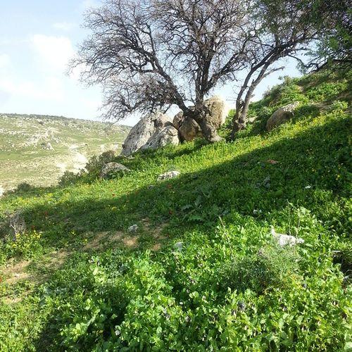 Spring in KufrAsad Irbid Jordan Travel MiddleEast