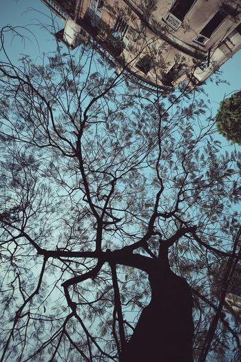 老树...