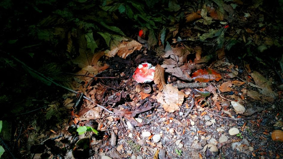 Toadstool hiding from the light in Thompson Park. Park Nature Nature On Your Doorstep Toadstools Contrast
