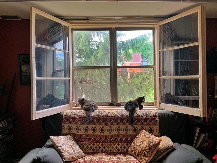 Cats relaxing on window at home