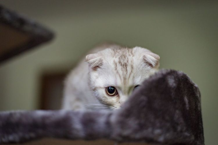 Portrait of kitten relaxing at home