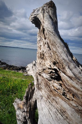 Wood EyeEm Selects Tree Stump Dead Tree Tranquility Sea Outdoors Cloud - Sky Day Horizon Over Water No People Nature Close-up Beauty In Nature