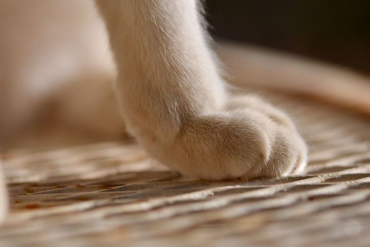 Cat Paw Cats Paws One Animal Animal Body Part Animal Leg Domestic Paw Pets Animal Themes Relaxation Close-up