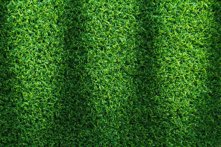 Grass field texture for golf course, soccer field or sports background concept design. Artificial grass. Beautiful Field Grass Green Nature Plant Abstract Backdrop Background Backgrounds Blade Clean Close-up Day Directly Above Environment Field Fresh Freshness Full Frame Garden Golf Grass Green - Golf Course Green Color Lawn Lush Meadow Nature No People Outdoors Pattern Plant Playing Field Seamless Soccer Space Sport Spring Summer Texture Textured  Textured Effect Turf White