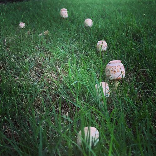 Grass Mushroom