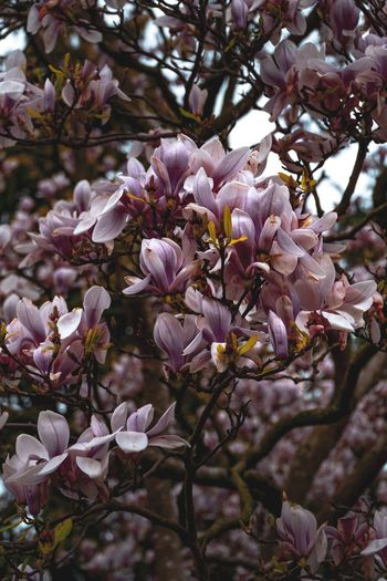 Flowers Nature Backgrounds Copy Space Background Wallpaper Pattern, Texture, Shape And Form Surfaces And Textures Textures and Surfaces Backgrounds Plant Flowering Plant Flower Fragility Beauty In Nature Growth Vulnerability  Freshness Close-up Tree Nature Blossom Day No People Springtime Focus On Foreground Inflorescence Pink Color Branch