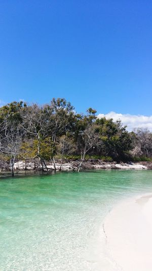 Creek Beach White Sand Trees Australia Nature Photography Tree Fraser Island Sky Water Tree Clear Sky Nature Blue Day Plant Beauty In Nature Sea No People Outdoors Scenics - Nature Tranquility Land Sunlight Beach Tranquil Scene