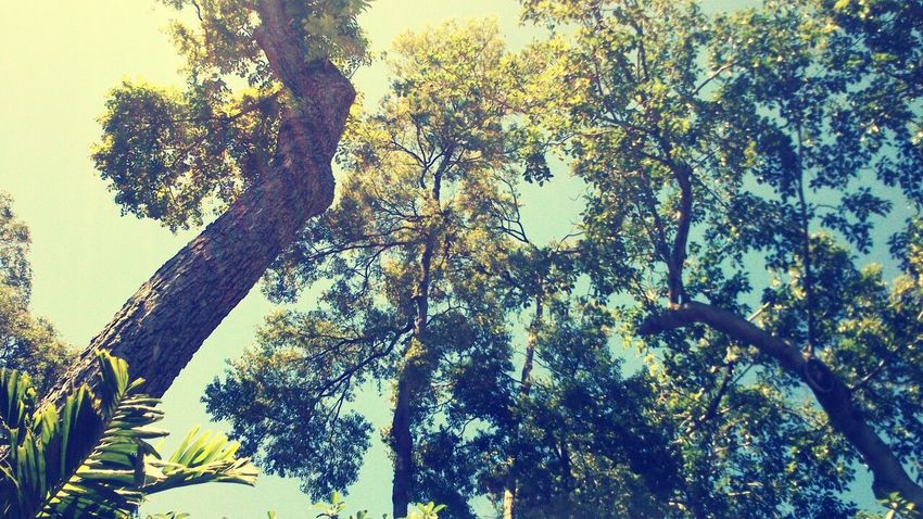 Nature Love Earth