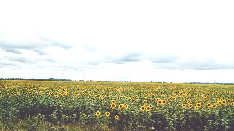 Sun Flowers Sommergefühle Breathing Space Lost In The Landscape