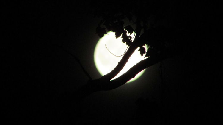 Last Night Full Moon 🌕Trees And Leaves cool_capture_ Cadillac Michigan