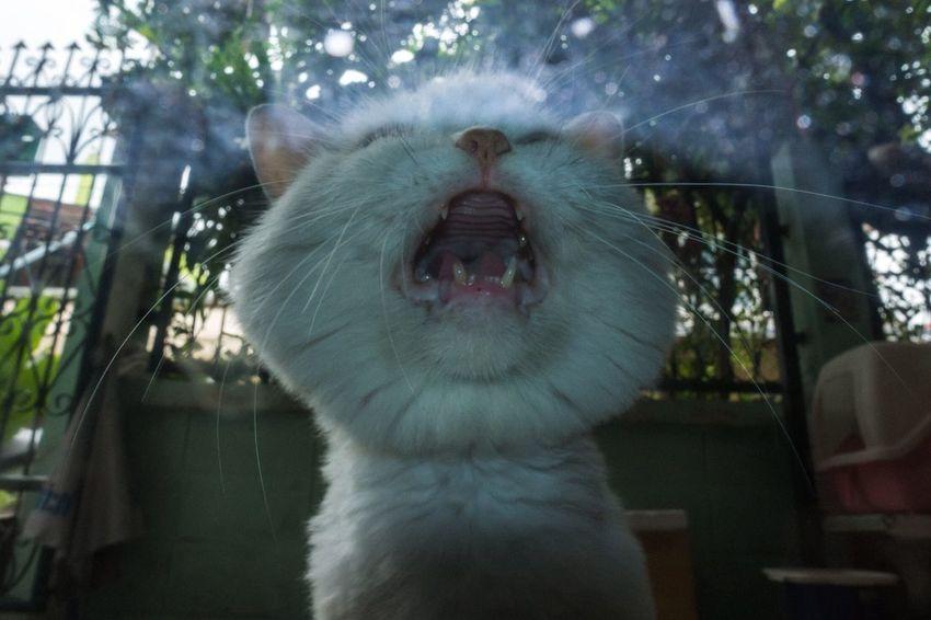 Everybodystreet Streetstyle Streetphotography Animal Crying Cat The Street Photographer - 2018 EyeEm Awards