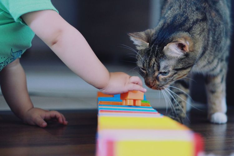 Boy playing with toy and cat on table at home