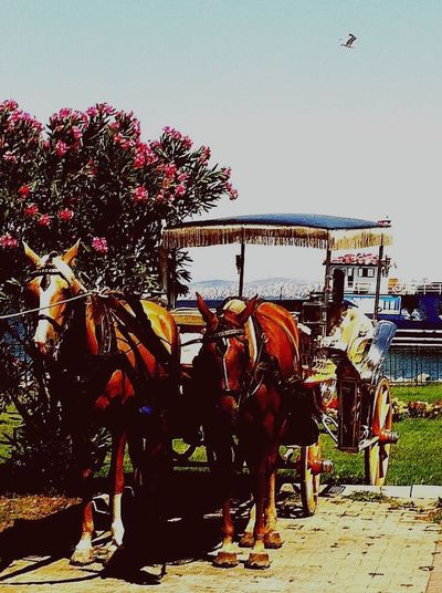Welcomeweekly Nature_collection Horses No People From My Point Of View Our Best Pics Prinkipo Transportation Mode Of Transport Travel Taking Photos Flowers, Nature And Beauty View Asian  Sea And Sky Carriage Carriage Ride Beauty Of Nature Outdoors Marmara Turkey Vertical Istanbul