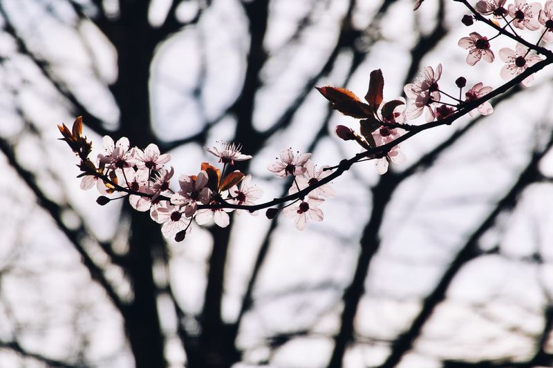 Plant Tree Branch Growth Flower Fragility Flowering Plant Freshness Day Blossom Low Angle View Focus On Foreground Outdoors Beauty In Nature Tranquility Close-up Sunlight Vulnerability  Nature No People