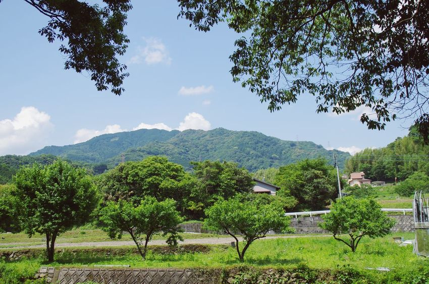 Mountains Tree Green Sky Nature Oita 大分 Japan Traveling Hanging Out The Essence Of Summer Hello World Relaxing Landscape