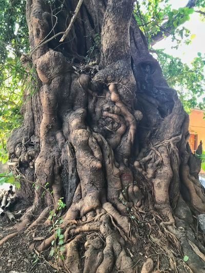 Old architectural nature carved tree Tree Beauty In Nature Tree Beauty In Nature Close-up Natural Pattern Nature Carving Nature Photography Tree Carvings Life In Trees Architectural Tree Tree With Carving Tree Trunk Religion Spirituality Tree Statue Root Sculpture Tree Trunk Ancient Civilization
