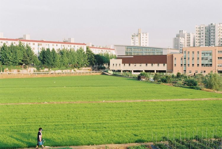 Grassy field and buildings against clear sky