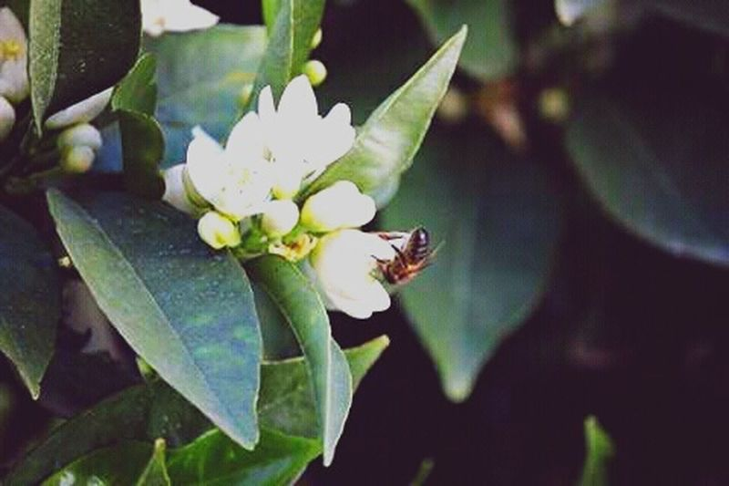 Hojas Insects  Abejorro Flower EyeEm Best Shots EyeEm Nature Lover Flower Photography Flowers, Nature And Beauty Flowers,Plants & Garden Flor Flowers Abeja
