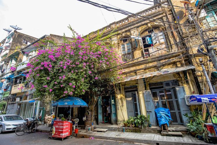 Flowers on street amidst buildings in city
