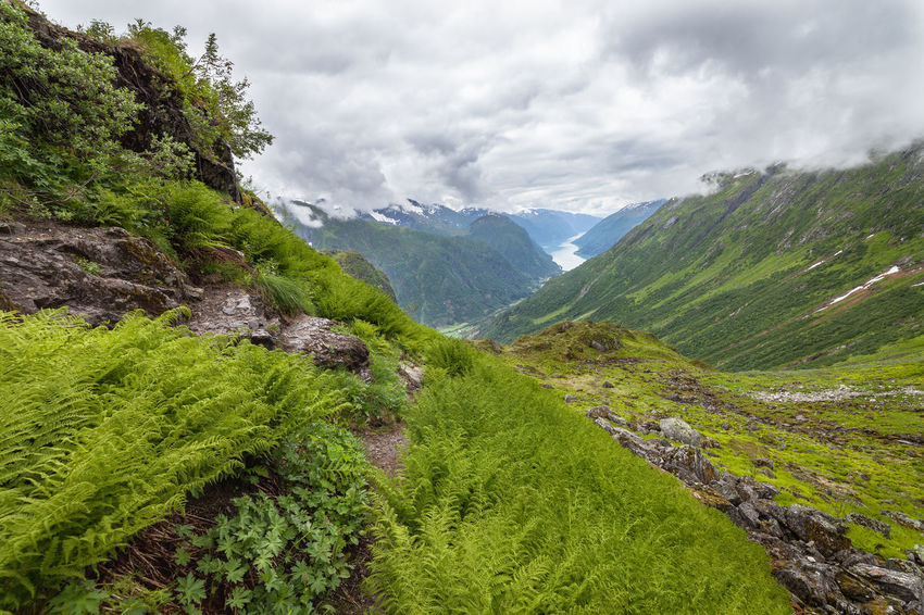 Farn Hiking Norway Path Secret Path Stairs Beauty In Nature Cloud - Sky Day Environment Fjord Grass Green Color Growth Land Landscape Mountain Mountain Peak Mountain Range Nature No People Outdoors Plant Scenics - Nature Sky Tranquil Scene Tranquility Tree Valley