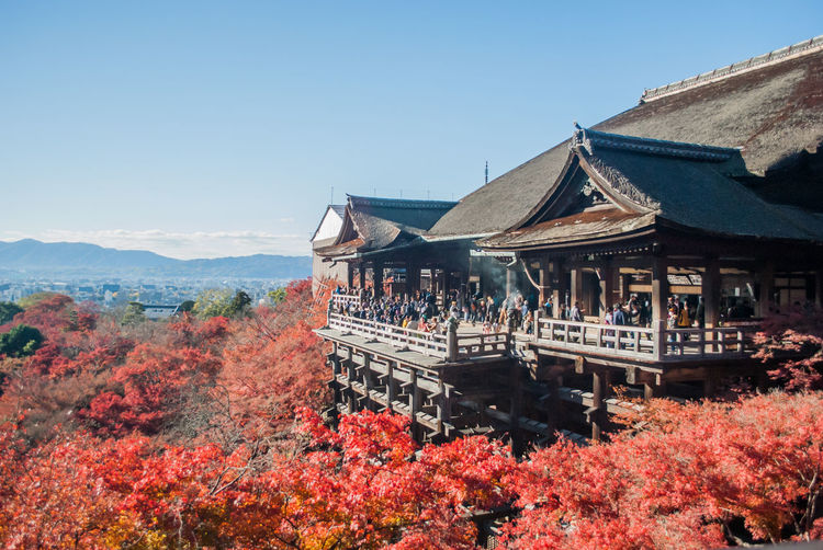 Japan Kiyomizu-dera Shrine Travel Architecture Autumn Beauty In Nature Belief Building Building Exterior Built Structure Change Clear Sky Group Of People Maple Mountain Nature Outdoors Place Of Worship Plant Religion Sky Temple Tree Woods