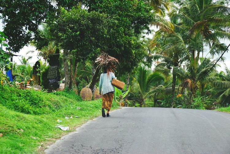 Rear view of woman transporting bundle of palm leaves on her head