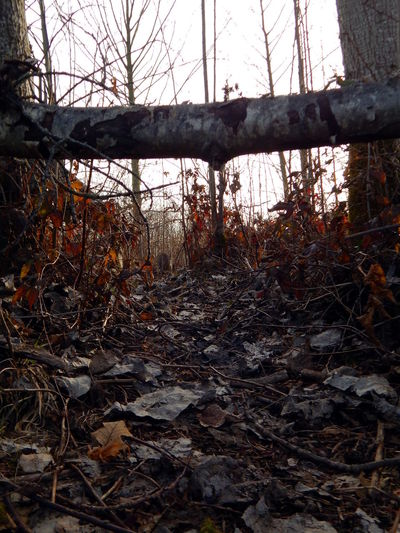 woodland Abandoned Autumn Bare Tree Beauty In Nature Branch Change Close-up Day Discovery Explore Fallen Fallen Tree Forest Leaf Leaves Log Nature No People Outdoors Path Sky Tranquility Tree Tree Winter Miles Away Miles Away