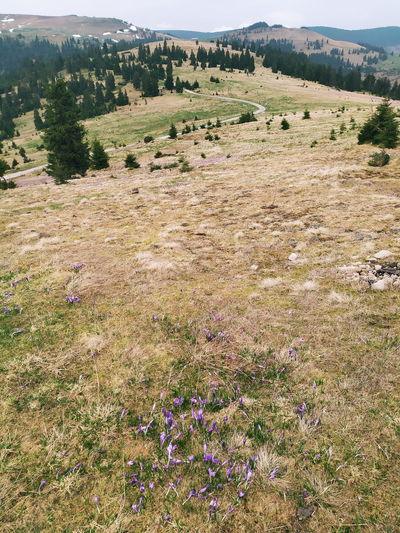 High angle view of purple flowers on field