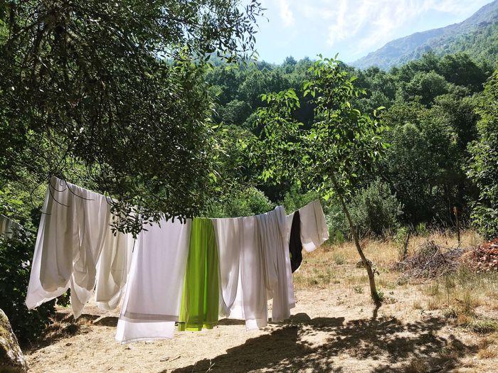 Drying Hanging