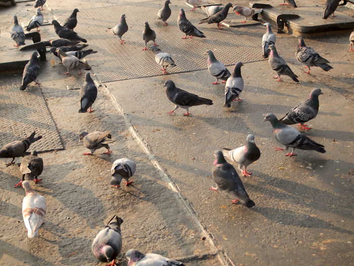 High angle view of pigeons on road