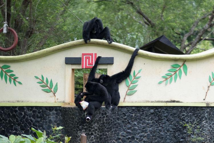 Mammal Animal Themes Animal Domestic One Animal Domestic Animals Vertebrate Pets Day Tree No People Plant Nature Black Color Domestic Cat Outdoors Animal Wildlife Monkey Primate Cat