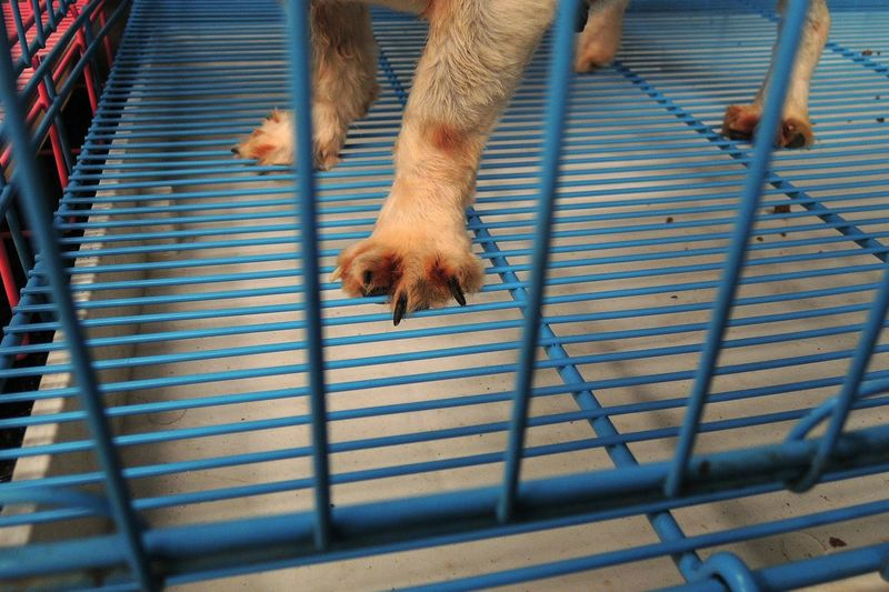 Cropped Image Of Dog In Cage