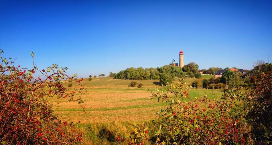 Lighthouse and fields on the island Rügen, Germany. Baltic Sea Bushes Bushes And Trees Cloudless Day Field Hagebutten Insel Insel Rügen Island Leuchtturm Lighthouse Ostsee Outdoor Outdoors Rose Hip Rügen Seascape Seaside Sky Tourism Tourismus Travel Trees Woods