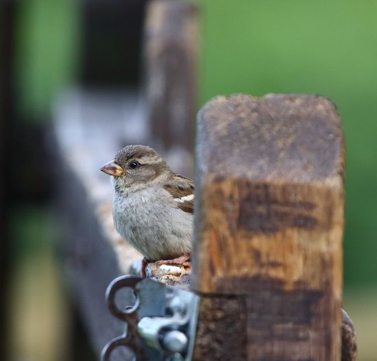 The holding point Sparrow EyeEm Selects Animal Wildlife Animal Themes Vertebrate Animal Animals In The Wild One Animal Perching Focus On Foreground Nature Selective Focus No People Bird
