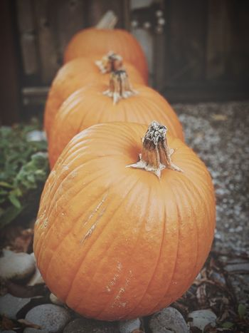"""""""The Last Lineup"""" A local suburbanites pumpkins, slated for recycling after serving as eye candy for the Autumn season, line up in orderly fashion. Fall End Of Autumn Harvest Pumpkins Autumn Theme Autumn Close-up Pumpkin Focus On Foreground Vegetable Orange Color"""