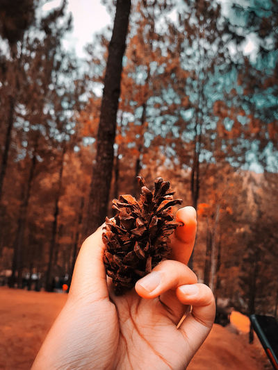 Close-up of hand holding plant against trees during autumn