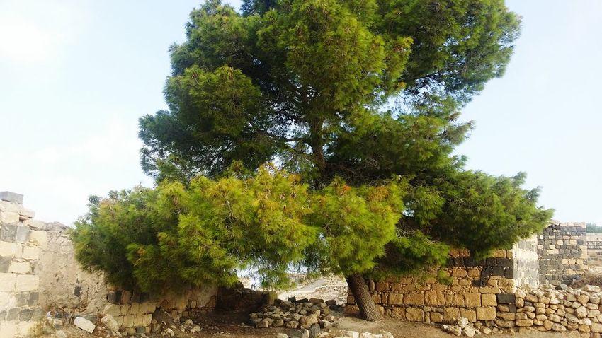 Um Qais Today :) Taking Photos EyeEm Tree Sky Building