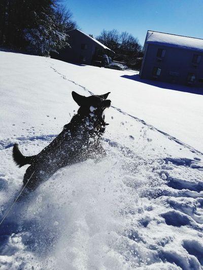 Dog on snow field against sky