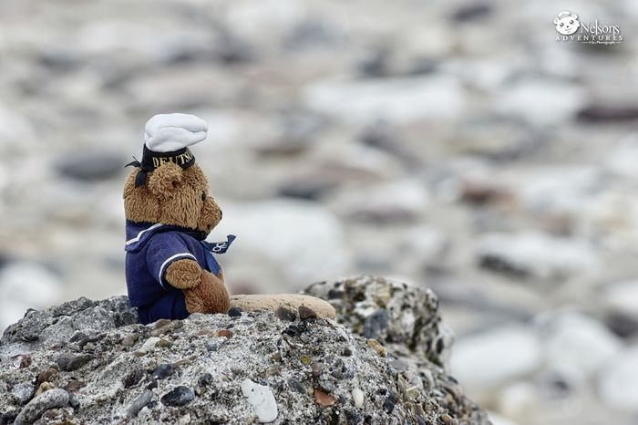 Nelson watches the sea. NelsonsAdventures Teddy Teddy Bear Teddybear Rock - Object Beach Sea Northsea Denmark Hanstholm EyeEm Masterclass EyeEm Nature Lover Nikon Sitting Stone Stones Denmark 🇩🇰 Landscape_Collection Scenics Summer Watching The Sea Close-up Nature Photo Series Stuffed Toy