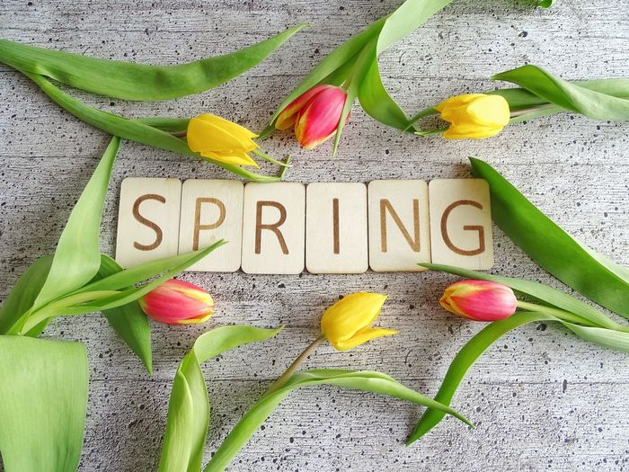 Spring letters Tag Wooden Letters Letters Tulips Springtime Spring Text Message Flower Spice Single Word No People Green Color Communication Multi Colored Freshness Close-up Nature Day