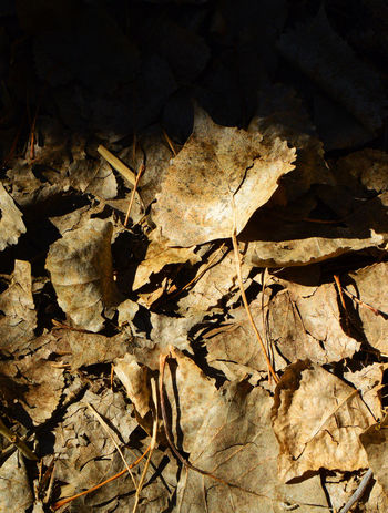On the edge of shadow Close-up Day Dry Leaves Nature No People Outdoors South Of Lingle Wyoming Sunlight