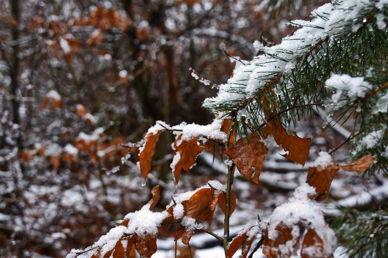 Blätter Deutschland February Fotos Frost Landschaft Nadeln Nature Schnee Walt Disney World Winter Jahreszeiten Landchaft Outdoors School Sky