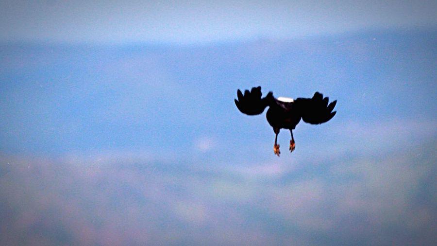 Bird in flight Gauteng Hartebeespoort Canon South Africa