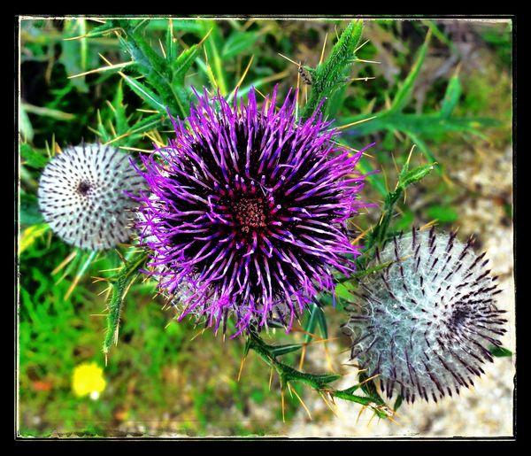Niederösterreich Mostviertel Snapseed Nature