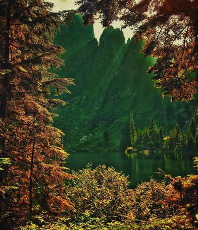 Tree Leaf Autumn Nature Lake Beauty In Nature Scenics Change Tranquil Scene Water Forest Mountain No People Tranquility Growth Outdoors Day Sky