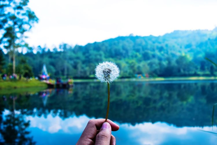 Cropped Hand Of Person Holding Dandelion Against Lake