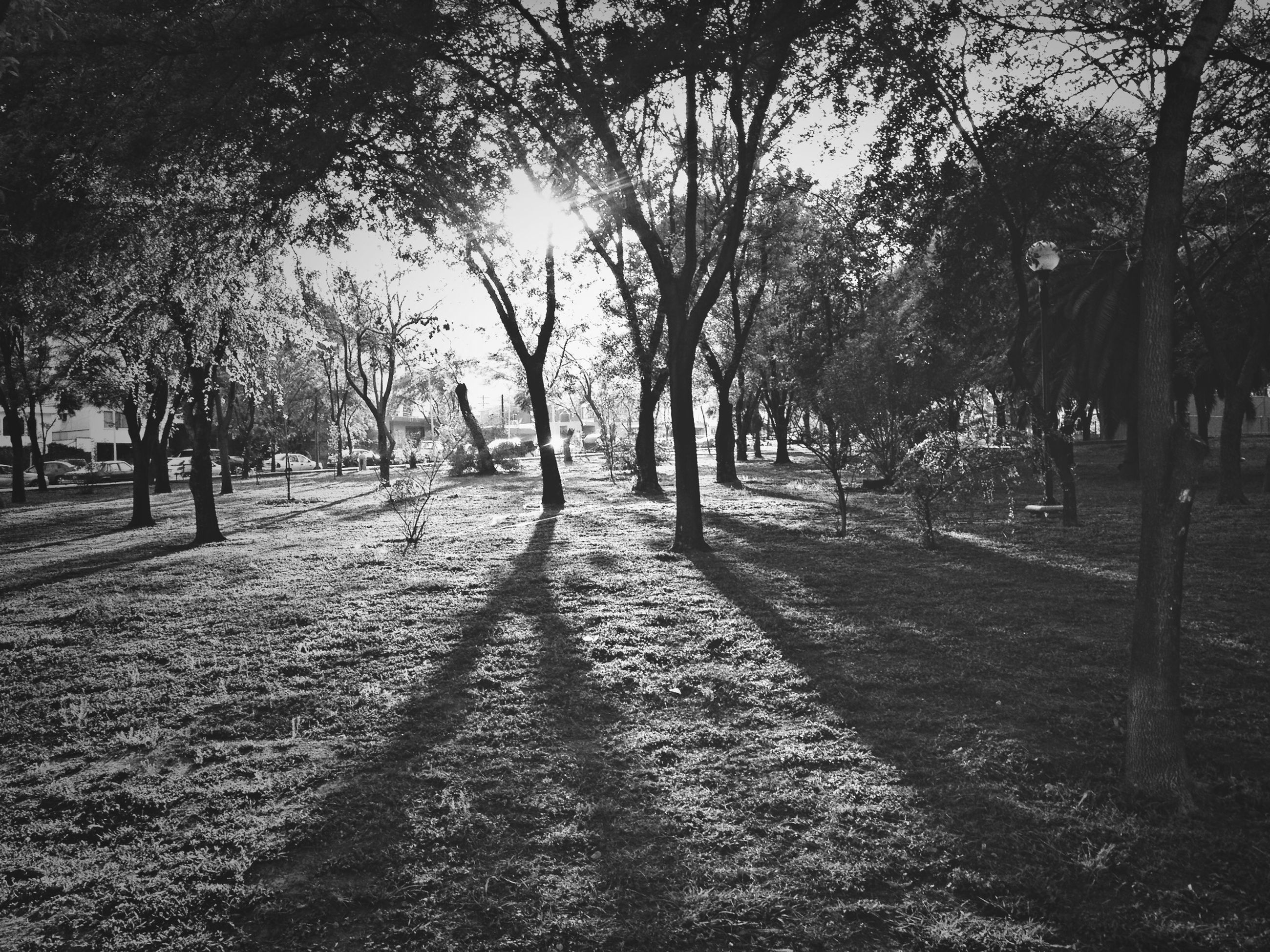 tree, tranquility, tree trunk, sunlight, tranquil scene, growth, shadow, nature, park - man made space, branch, beauty in nature, scenics, footpath, the way forward, treelined, outdoors, day, road, street, no people